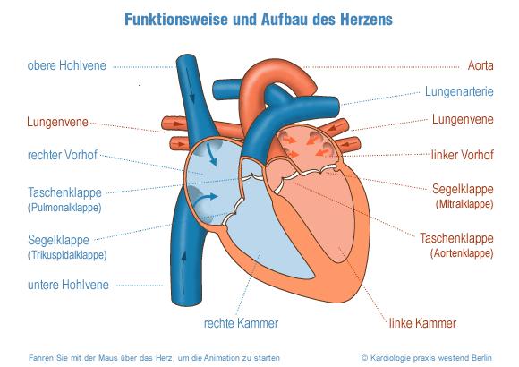 Anatomie spritzen
